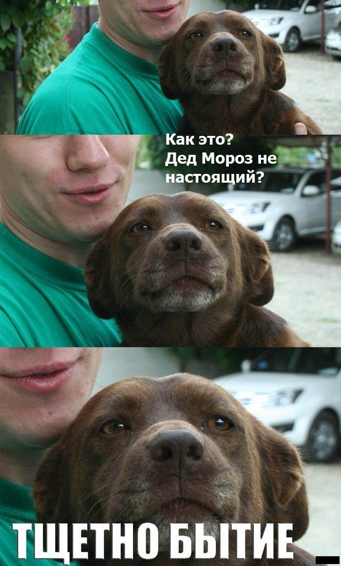 Фотоприкол бесплатно от zubrilov за 26 декабря 2012