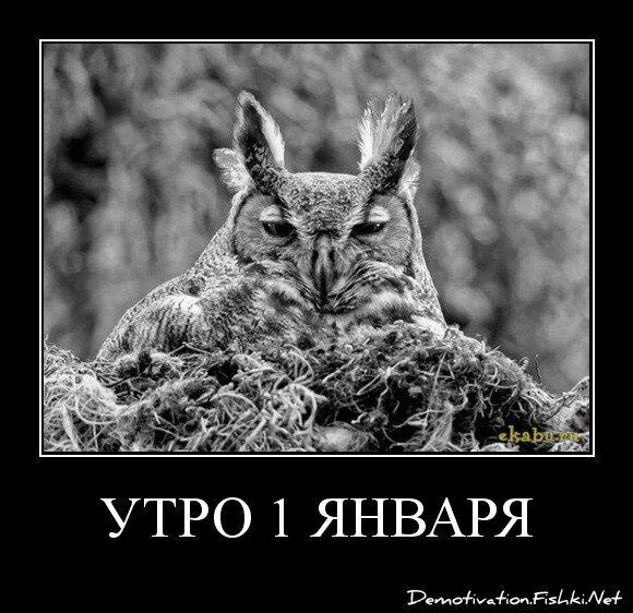 утро 1 января от zubrilov за 30 декабря 2012