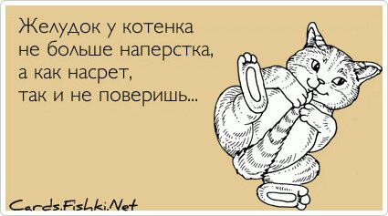 Желудок у котенка не больше наперстка, а как насрет,... от unknown_user за 31 декабря 2012