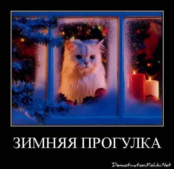 зимняя прогулка от zubrilov за 08 января 2013