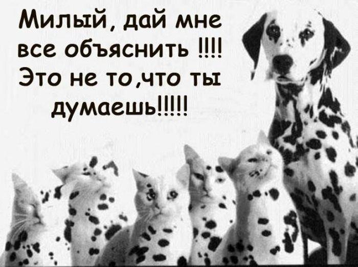 Юмор от zubrilov за 09 января 2013