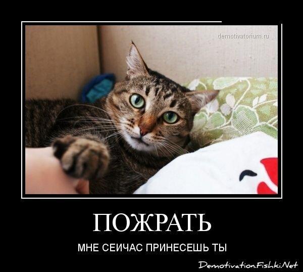 Демотиваторы, часть 328. от zubrilov за 11 января 2013