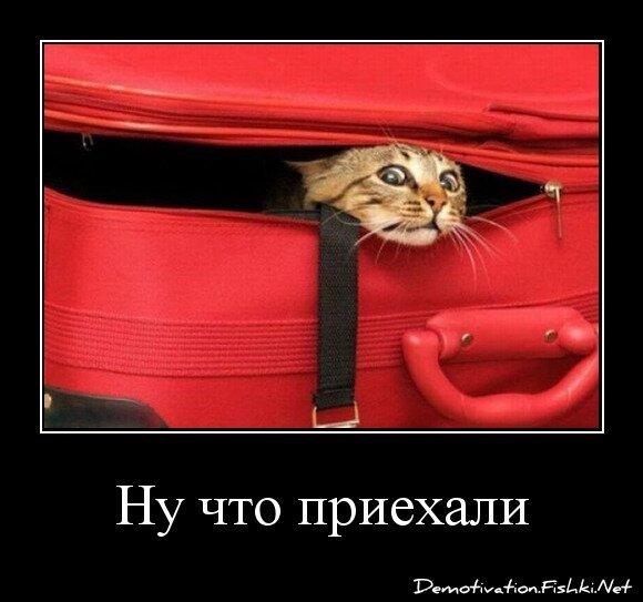 Ну что приехали от zubrilov за 11 января 2013