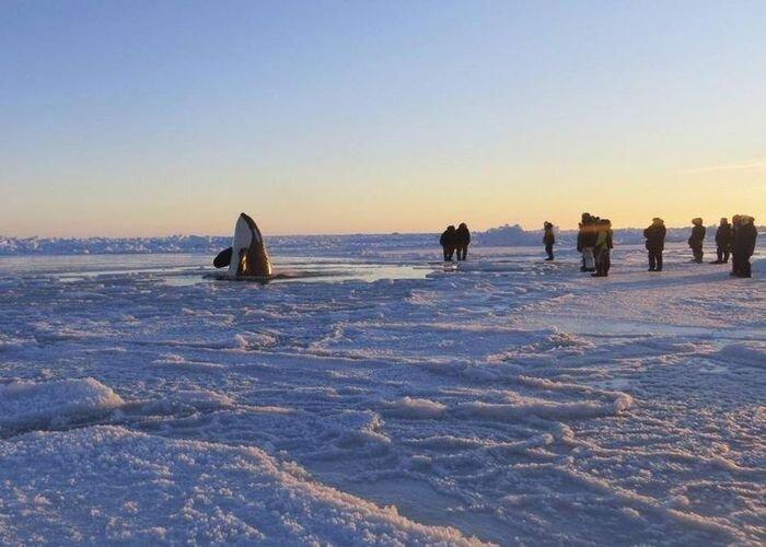 Ледяная ловушка (9 фото)