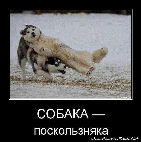 Собака — от dimurik за 15 января 2013