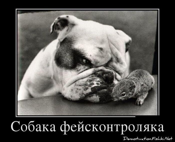 Демотиваторы, часть 332. от zubrilov за 21 января 2013