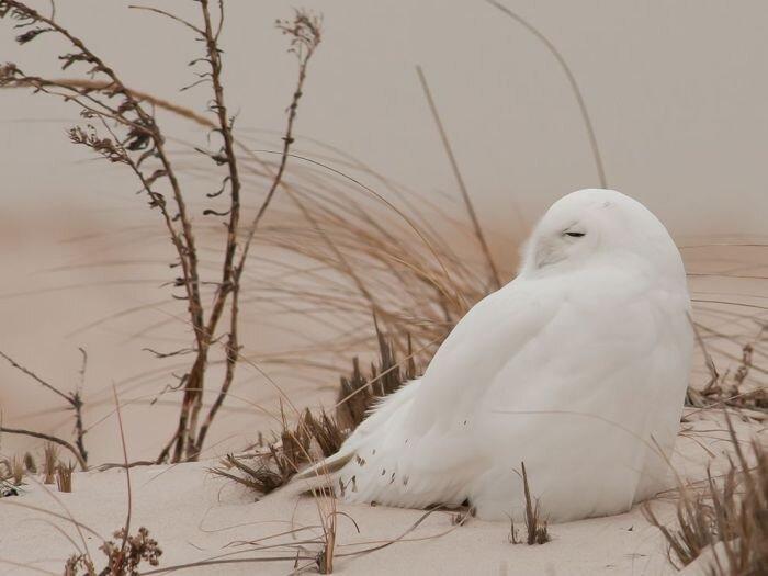 Фотоприкол онлайн бесплатно от zubrilov за 29 января 2013