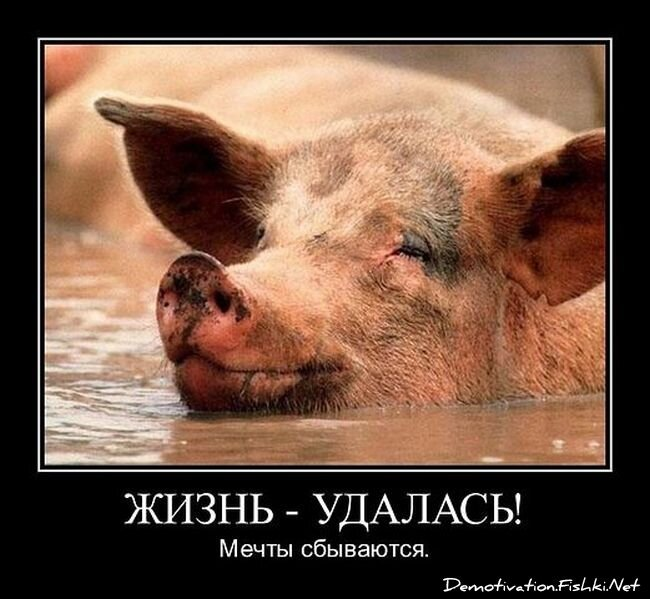 Демотиваторы, часть 337. от zubrilov за 01 февраля 2013