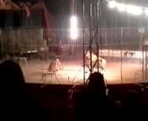 Подборка роликов от 05.02.2013