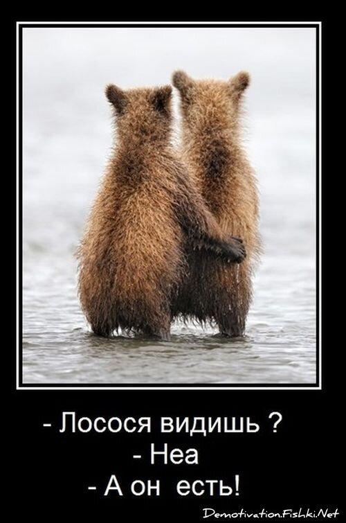 Демотиваторы, часть 340. от zubrilov за 08 февраля 2013