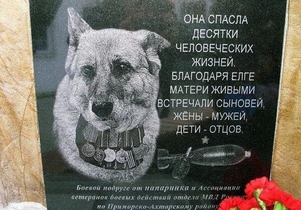 Фотоприкол онлайн бесплатно от zubrilov за 15 февраля 2013