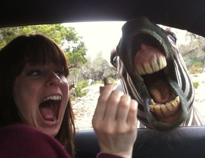 Смешная фотогалерея