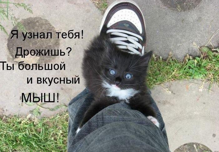 Прикол от zubrilov за 25 февраля 2013