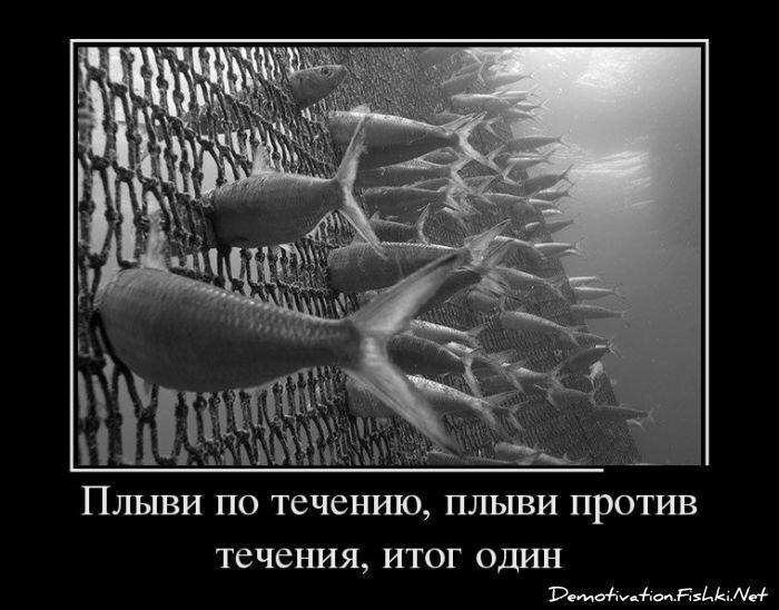 Демотиваторы, часть 348. от zubrilov за 27 февраля 2013