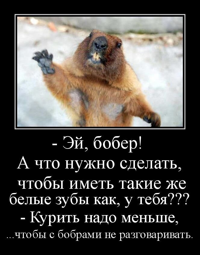 Прикольные фото от zubrilov за 05 марта 2013