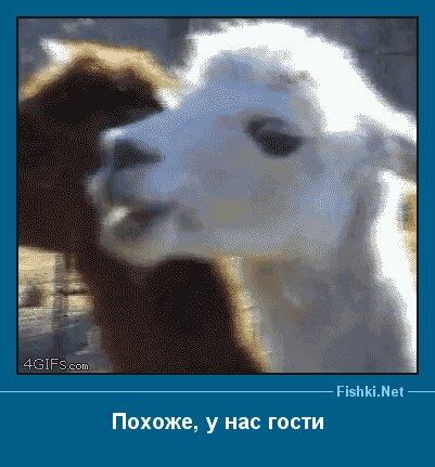 Новый фотоприкол от zubrilov за 12 марта 2013