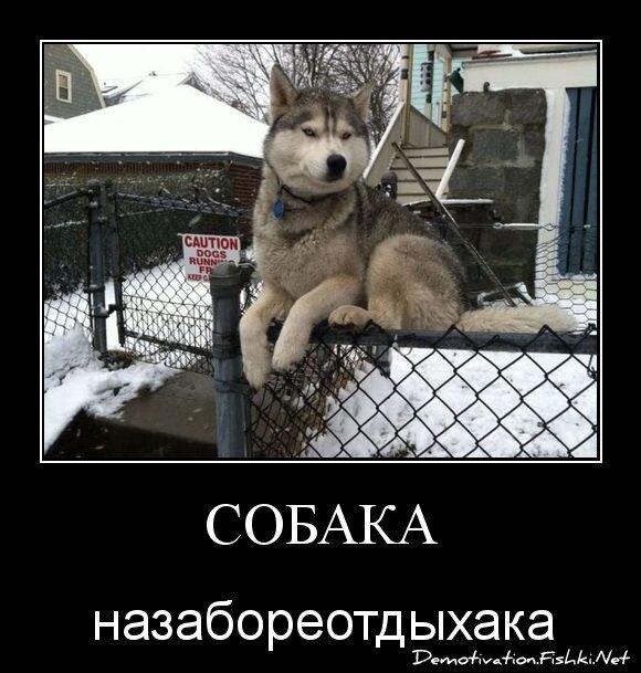 Собака от zubrilov за 12 марта 2013
