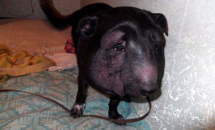 Спасенная от верной гибели собака (4 фото)