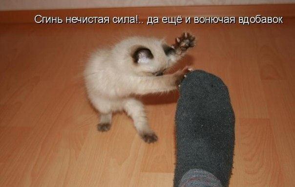Фотоприкол онлайн бесплатно от zubrilov за 19 марта 2013