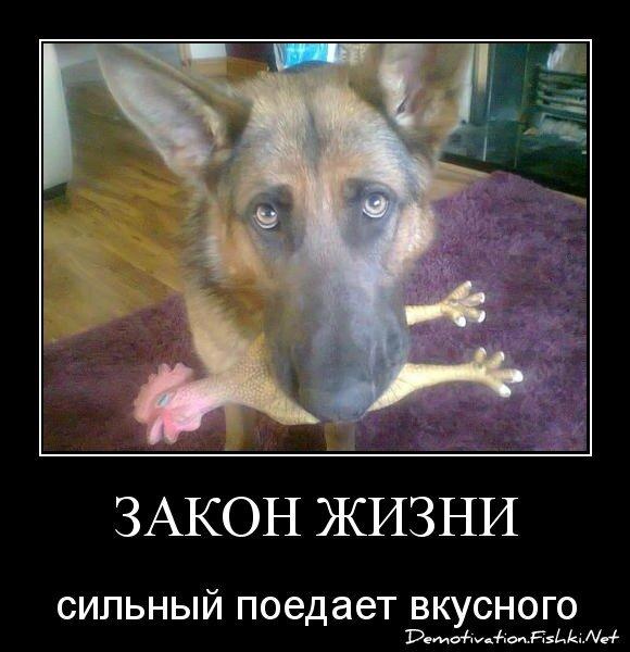 Закон жизни от zubrilov за 22 марта 2013