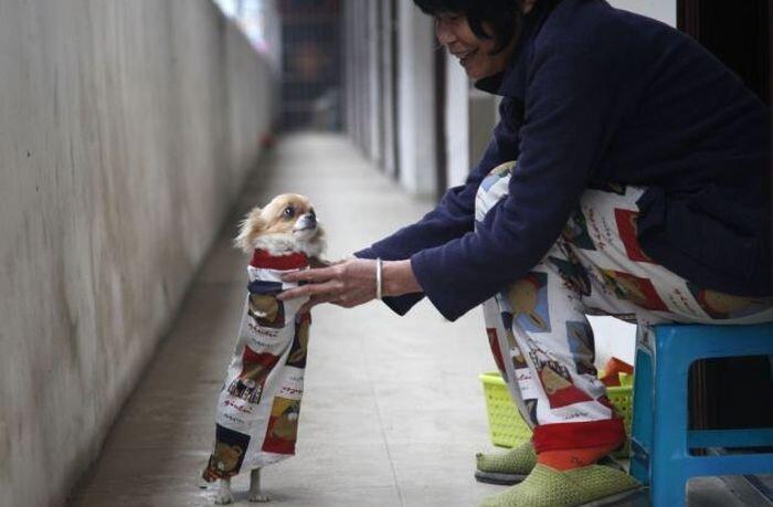 Собака прямоходящая (5 фото)