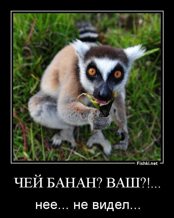 Чей банан? Ваш?!...