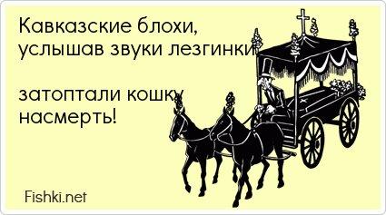 Кавказские блохи, услышав звуки лезгинки,  затоптали...