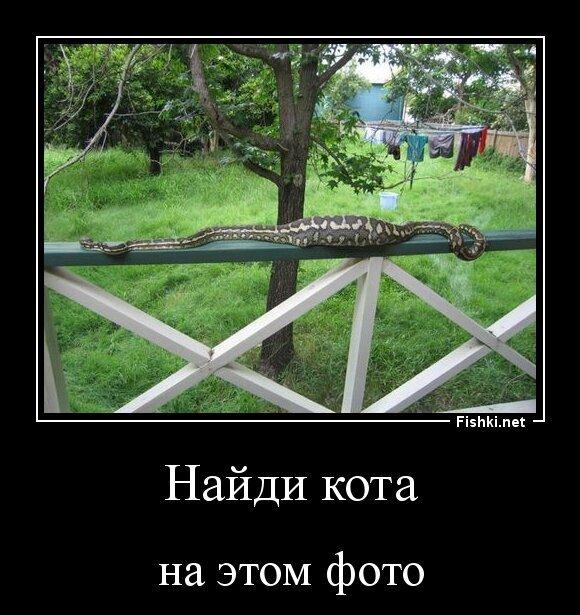 Найди кота от zubrilov за 30 марта 2013