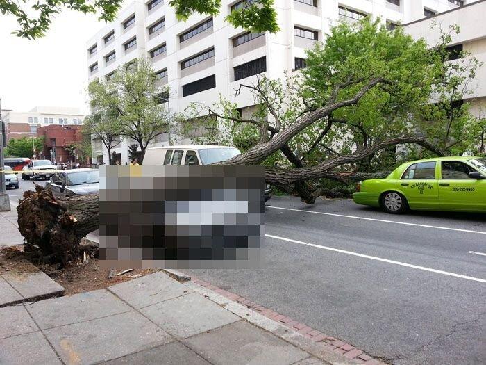 Дерево упало на BMW (5 фото)