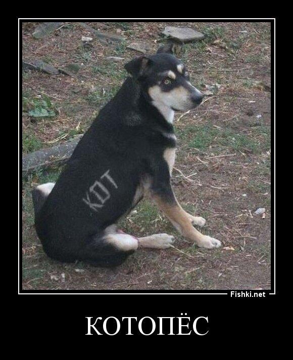 Котопёс от zubrilov за 30 апреля 2013