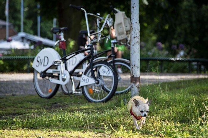 На что будет похожа городская велосипедная сеть Москвы? (20 фото)