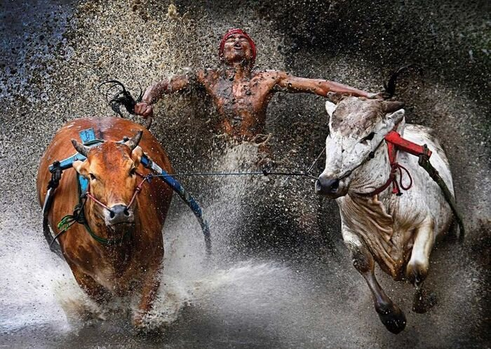 Лучшие работы World Press Photo 2013 (15 фото)
