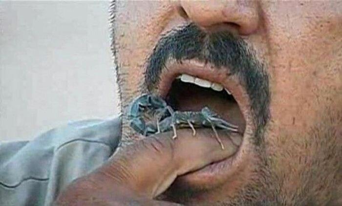 Скорпионовая зависимость (4 фото)
