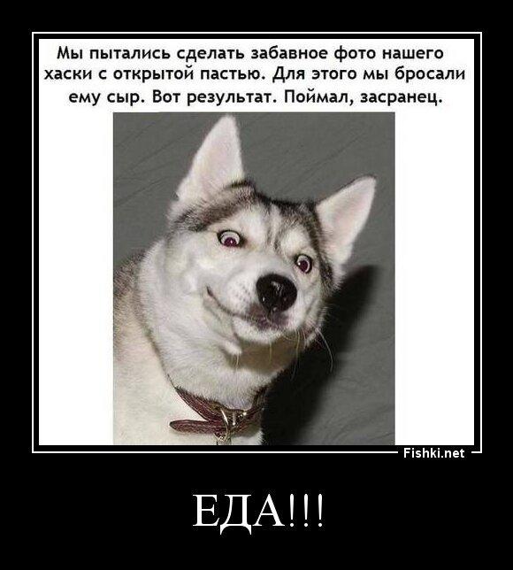 ЕДА!!! от zubrilov за 17 июня 2013