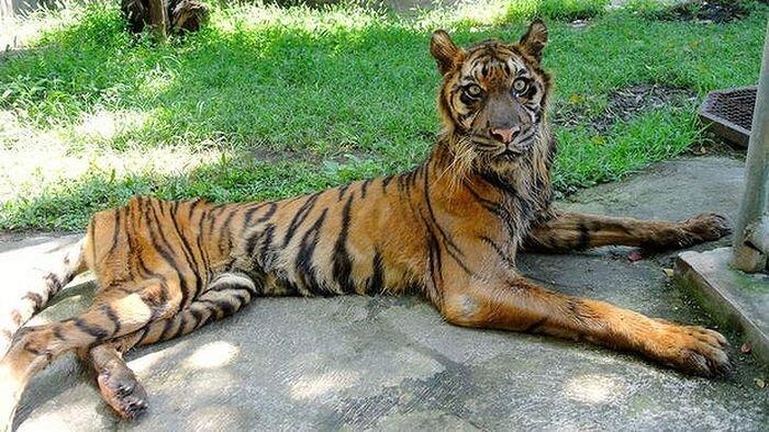 Зоопарк Сурабая в Индонезии (10 фото)