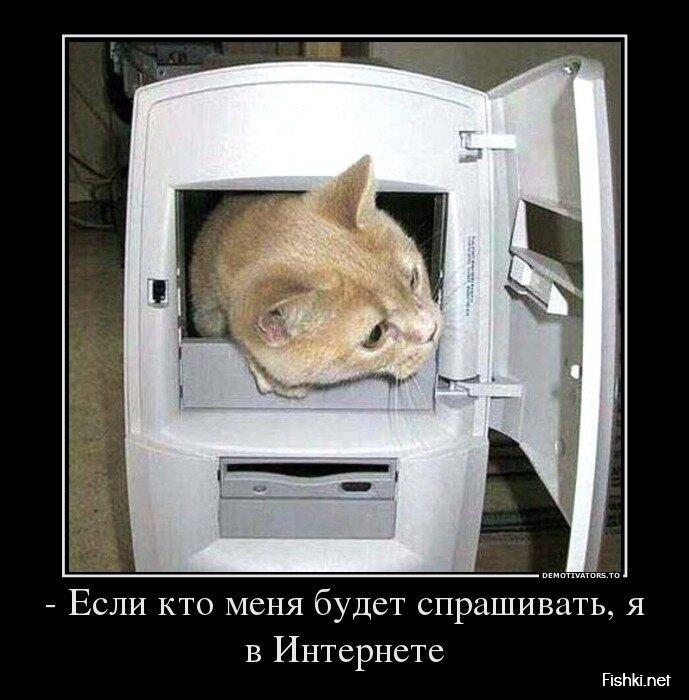 Демотиваторы, часть 397. от zubrilov за 03 июля 2013