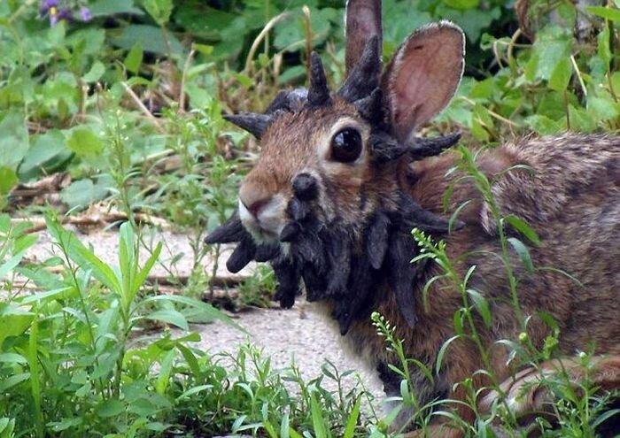 Адский кролик взбудоражил интернет (4 фото+видео)