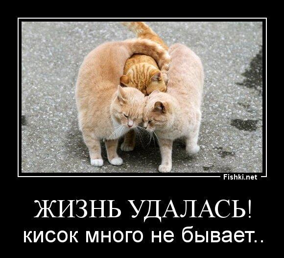 Жизнь удалась! от Игорь Беляев за 10 июля 2013