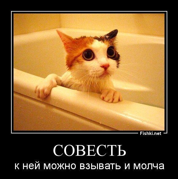 СОВЕСТЬ от zubrilov за 22 июля 2013