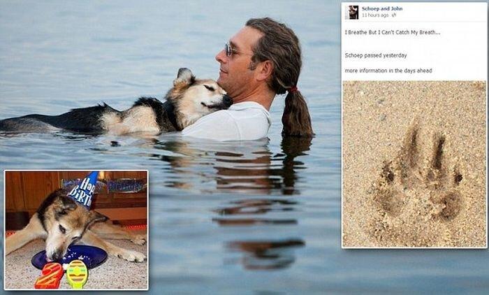 Умерла собака, фото которой тронуло весь мир (11 фото)
