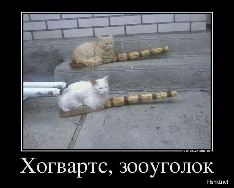 Демотиваторы, часть 406 от zubrilov за 24 июля 2013