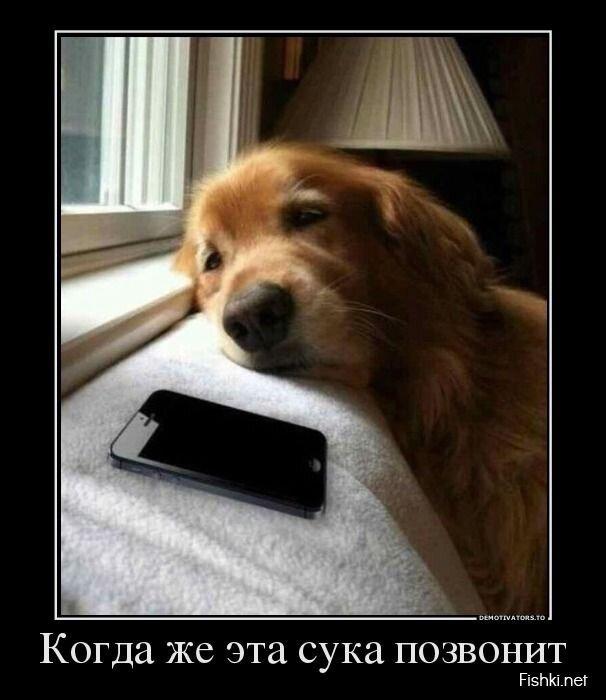 Демотиватор от zubrilov за 26 июля 2013