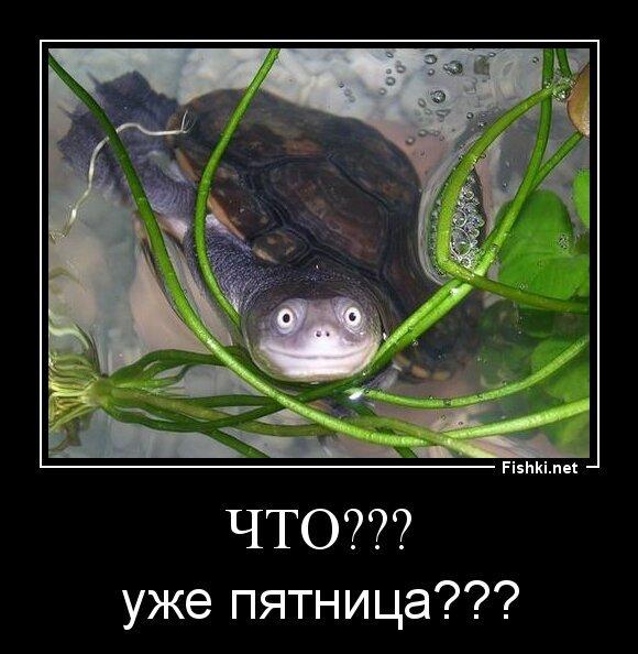 Что??? от zubrilov за 26 июля 2013