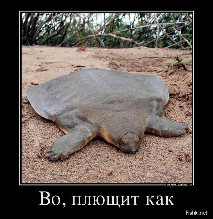 Демотиваторы, часть 409 от zubrilov за 31 июля 2013