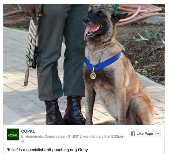 Эта собака поймала 115 охотников на носорогов
