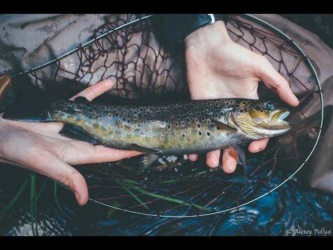Рыбалка как основное хобби. (продолжение) Карелия.Форель.Осень