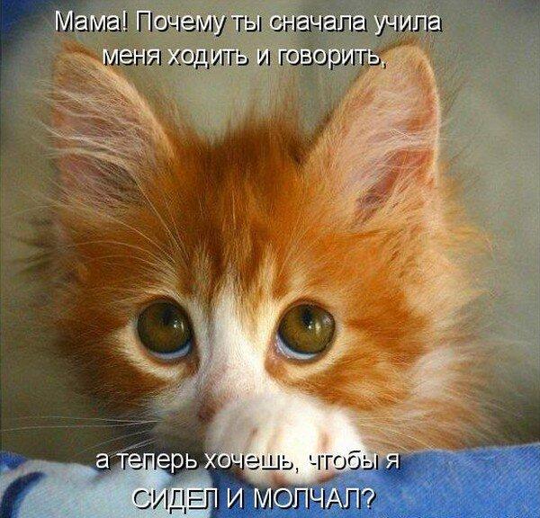Прикольные коты (38 фото)