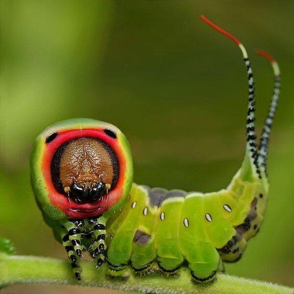 Необычные насекомые (13 фото)