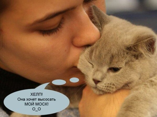 О чем на самом деле думают коты на выставках (26 фото)