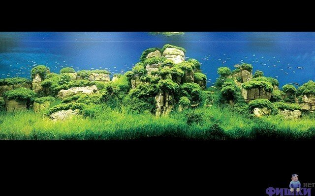 Леса в аквариумах (100 фото)